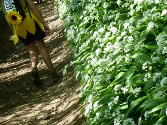 Bryony walking the Wight wild amongst garlic