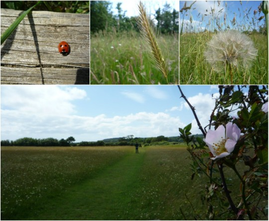 Photo collage of Newtown Meadow, Isle of Wight