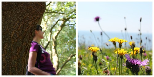 Photo collage of Ventnor Isle of Wight woodlands