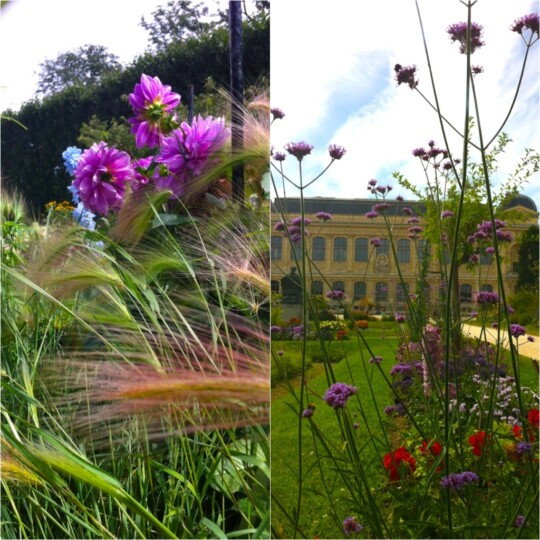Photo collage of Jardin des Plantes