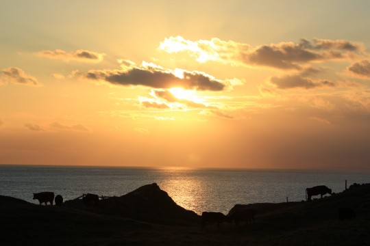 Clifftop sunset at St Catherine's Point