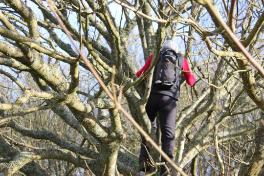 Climbing trees by Hoy Monument Isle of Wight