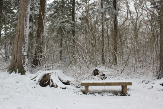 Snowy bench in Parkhurst Forest Isle of Wight