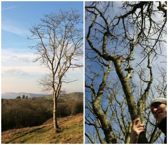Skinny trees photo collage