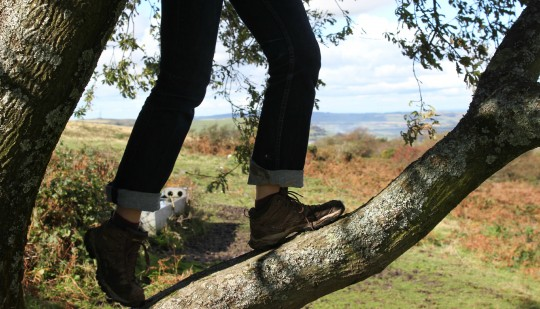 Close up of feet climbing a tree branch