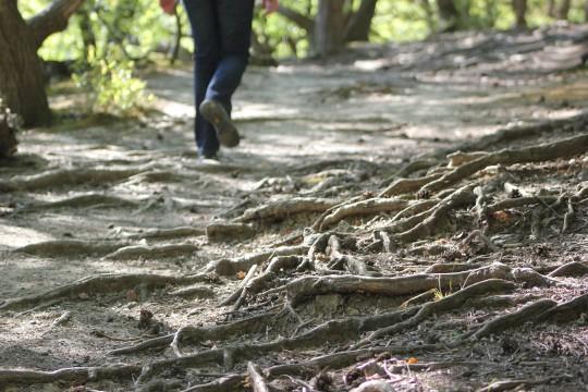 Walking through tree roots