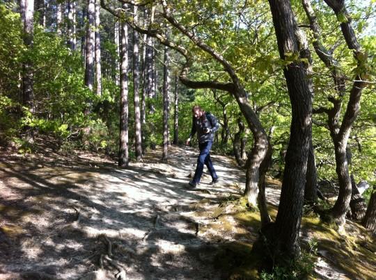 Tom walking through trees