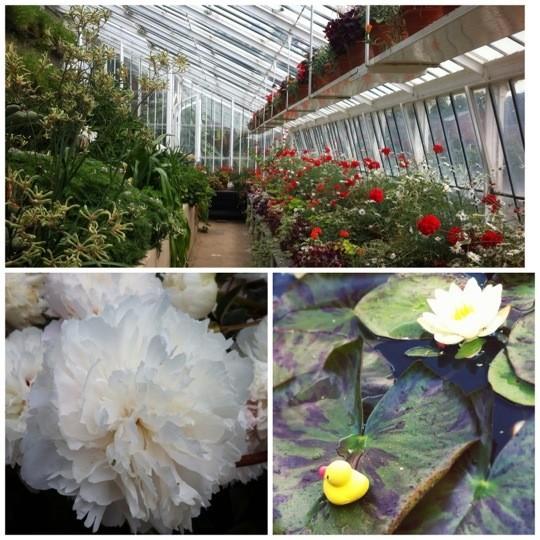 Greenhouse photo collage