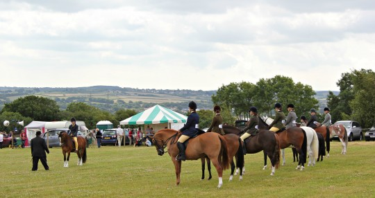 Horses lined up at the county show