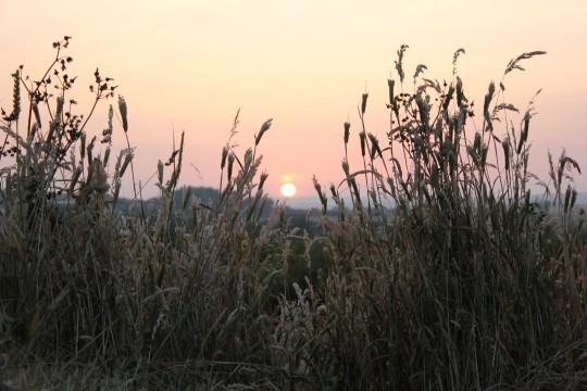 Sunset through the tall grass