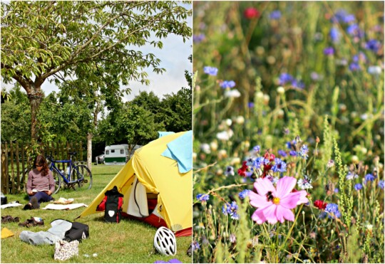 Campsite and wild flowers photo collage