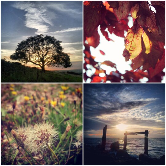 Tree, leaves, grass and sea photo collage