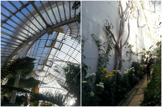 Inside Belfast Palm House, roof and wall photo collage