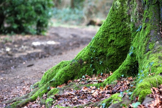 Tree roots covered in moss