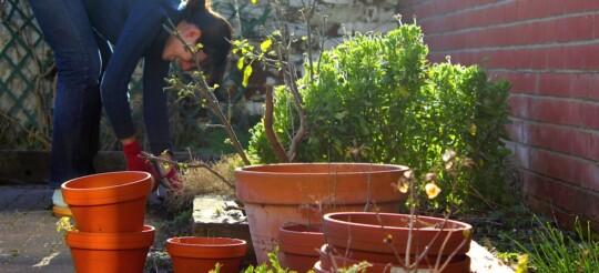 Rusty gardening