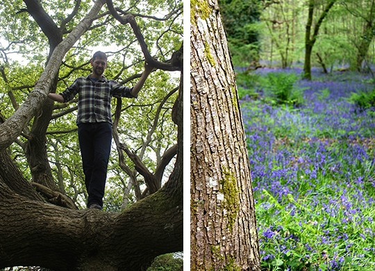 Tom up a tree and Borthwood Copse photo collage
