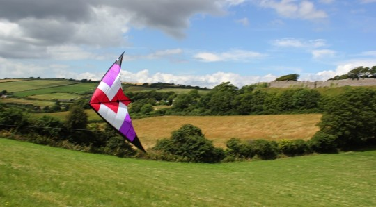 Kite flying low in a field