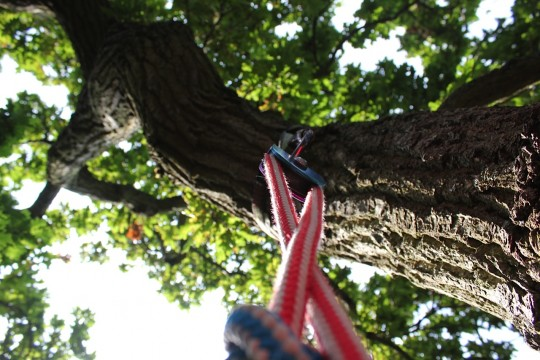 Looking up at a pulley in a tree