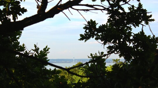 View of Spinnaker Tower across the water through the trees