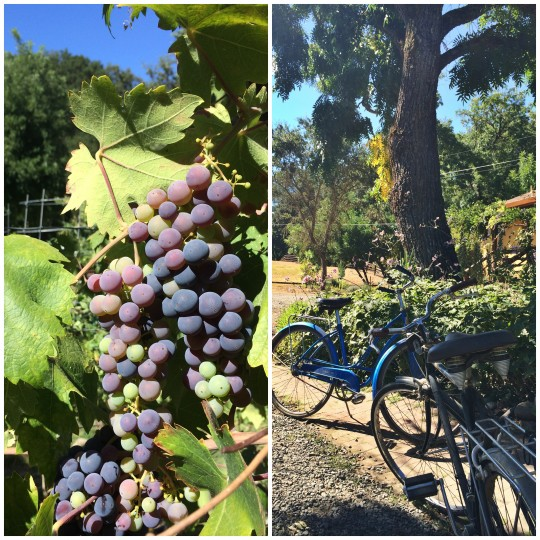 Grapes and bikes at Rust Ridge winery