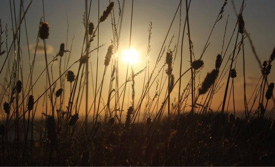 The sun through wild grass