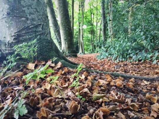 Forest floor by Carisbrooke Castle