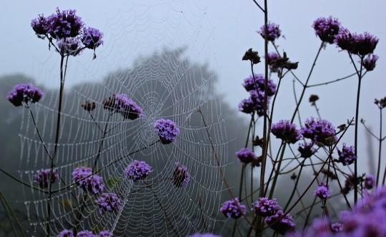 Cobwebs at dawn