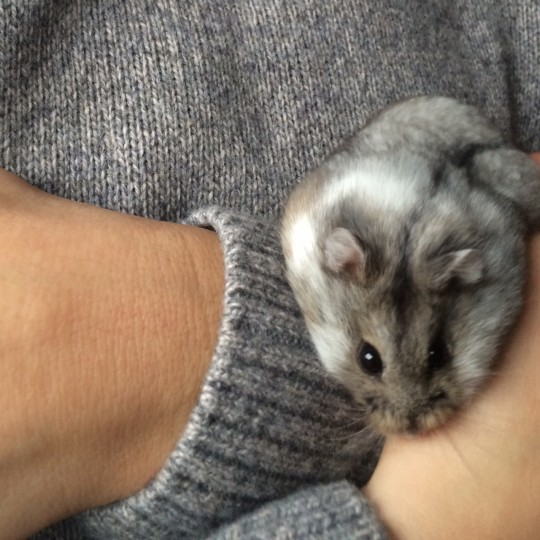 Mabel the hamster being held