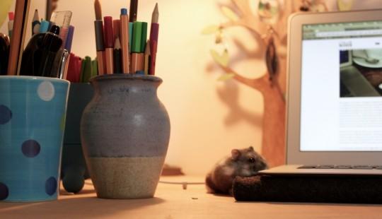 Hamster on a desk