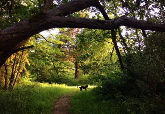 Rolo the dog in the woods