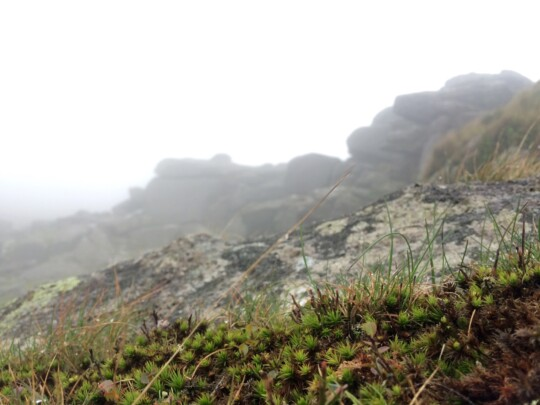 Closeup of flowers on top of a foggy moor