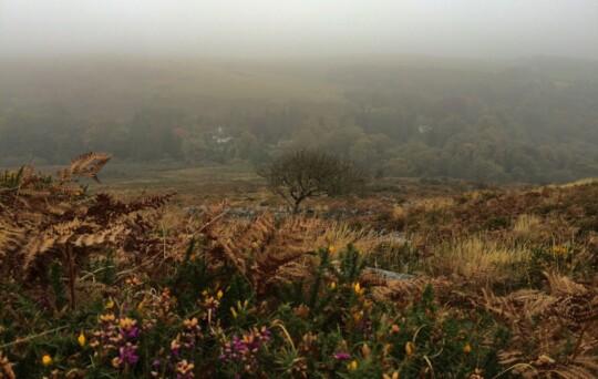 Morning fog in Dartmoore