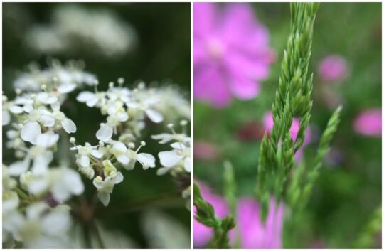 Wildflower Collage